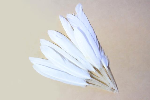 """""""1羽から8枚しか取れない""""貴重な1級羽根のみを使用しています"""